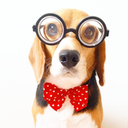 Professor Beagle